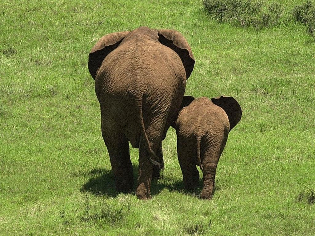 Elefanti Zimbabwe Vittime Bracconaggio
