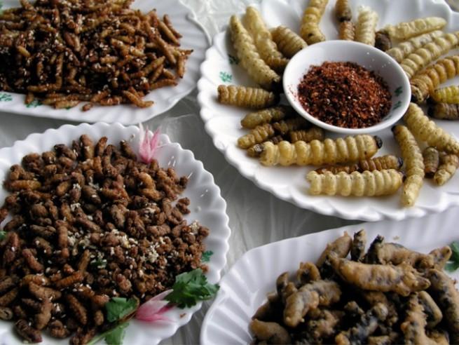 Insetti e alghe a tavola italia supererà tabù culinario zz