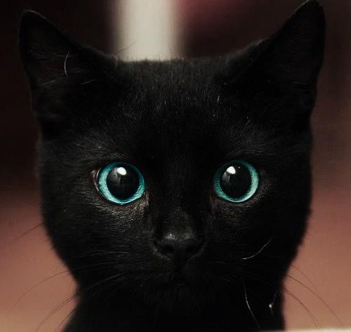 Giornata Del Gatto Nero Perche E Lamore Non Il Colore Che Conta