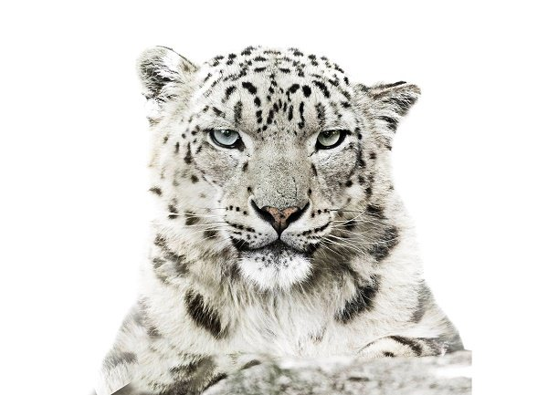 Calendario WWF 2016