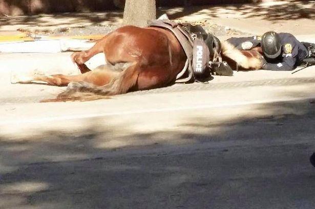 Texas, poliziotto conforta cavallo moribondo