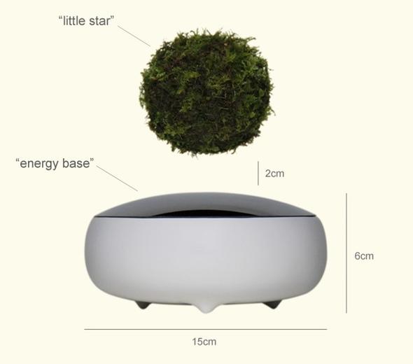 Air Bonsai, ecco il bonsai levitante: prezzi da 200 dollari