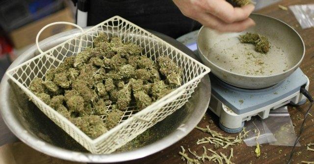 Cannabis legale in Italia? Macché, ancora vietata coltivazione domestica