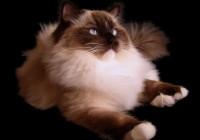 Gatti più belli al mondo a Padova, mostra-concorso imperdibile