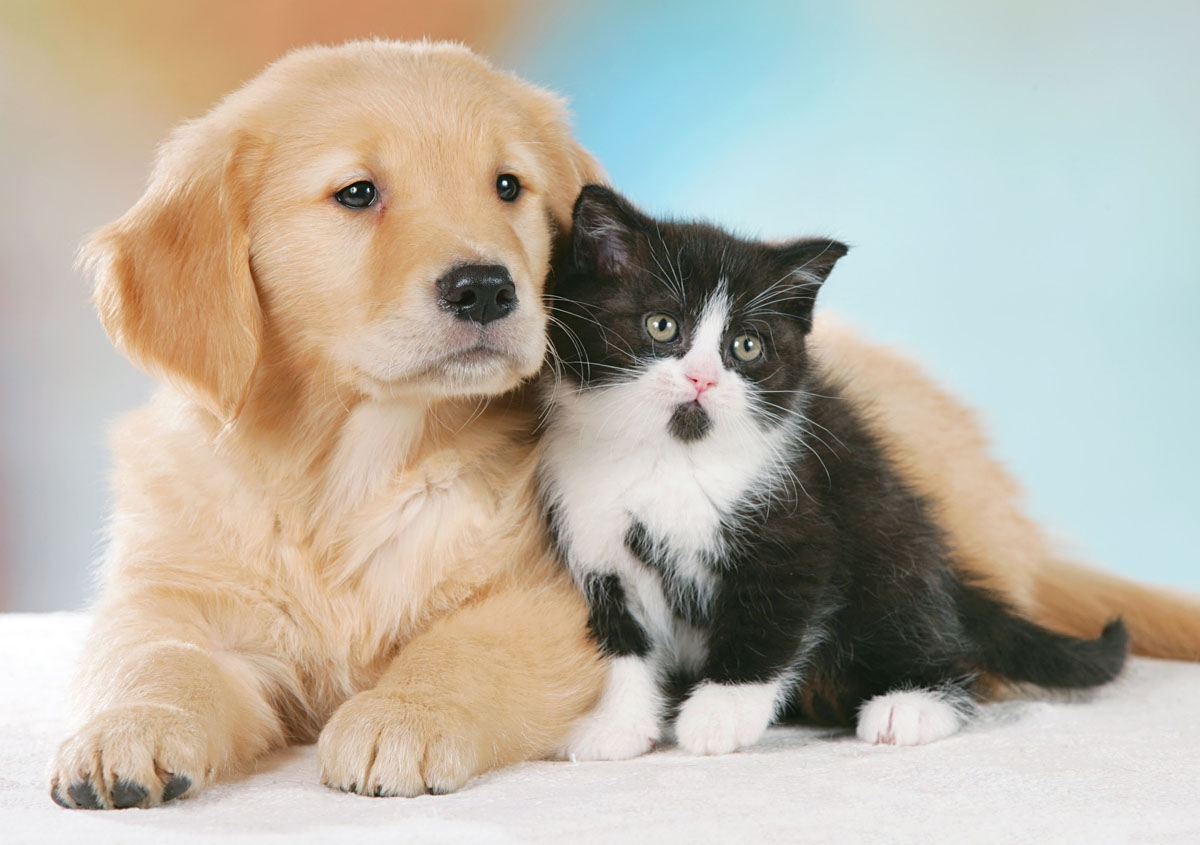 Cani più Affettuosi dei Gatti verso i Padroni