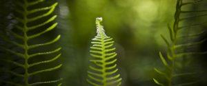CO2 rende Terra più green