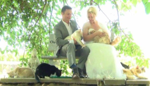 1000 gatti e un matrimonio