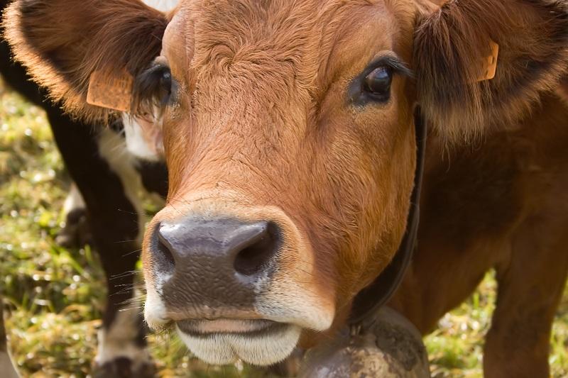 Giornata mondiale senza carne: riflettere su impatto ambientale allevamenti animali