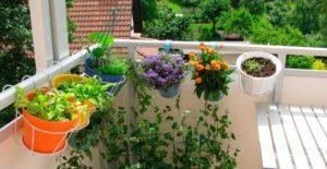 erbe_aromatiche_balcone