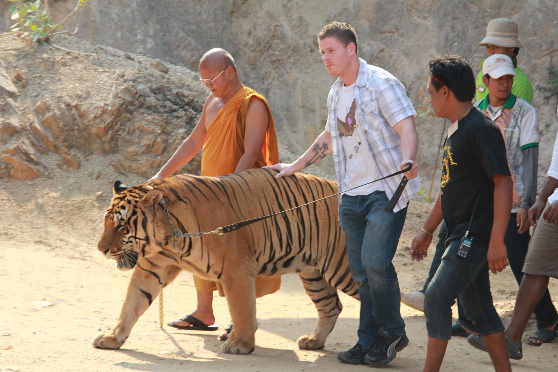 Thailandia, Tempio delle Tigri chiuso: scoperta macabra