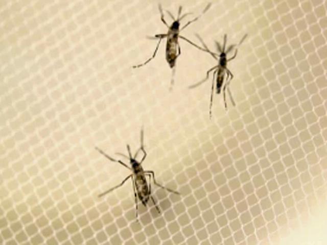 Zika virus a Miami: quattro casi