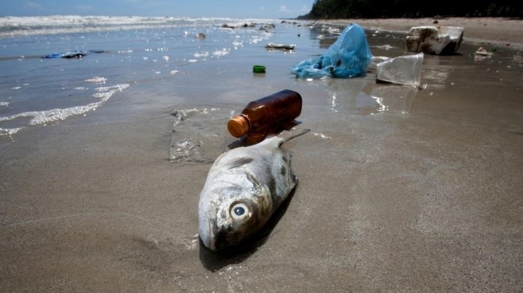 Plastica negli oceani finisce nell'organismo dei pesci