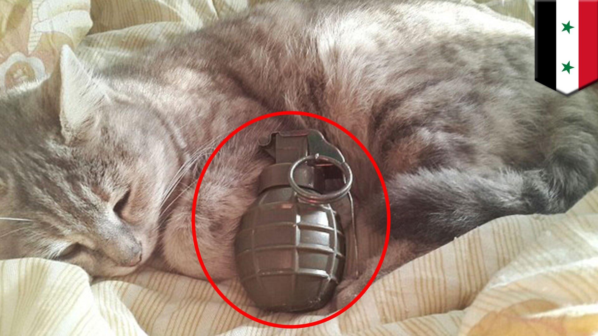 Isis emette fatwa per uccidere gatti