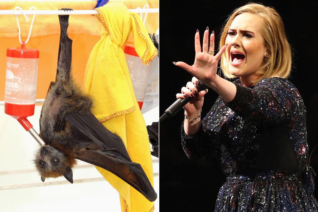 Adele terrorizzata dal pipistrello