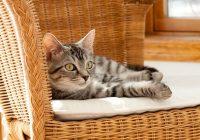 Come accogliere un gatto in casa