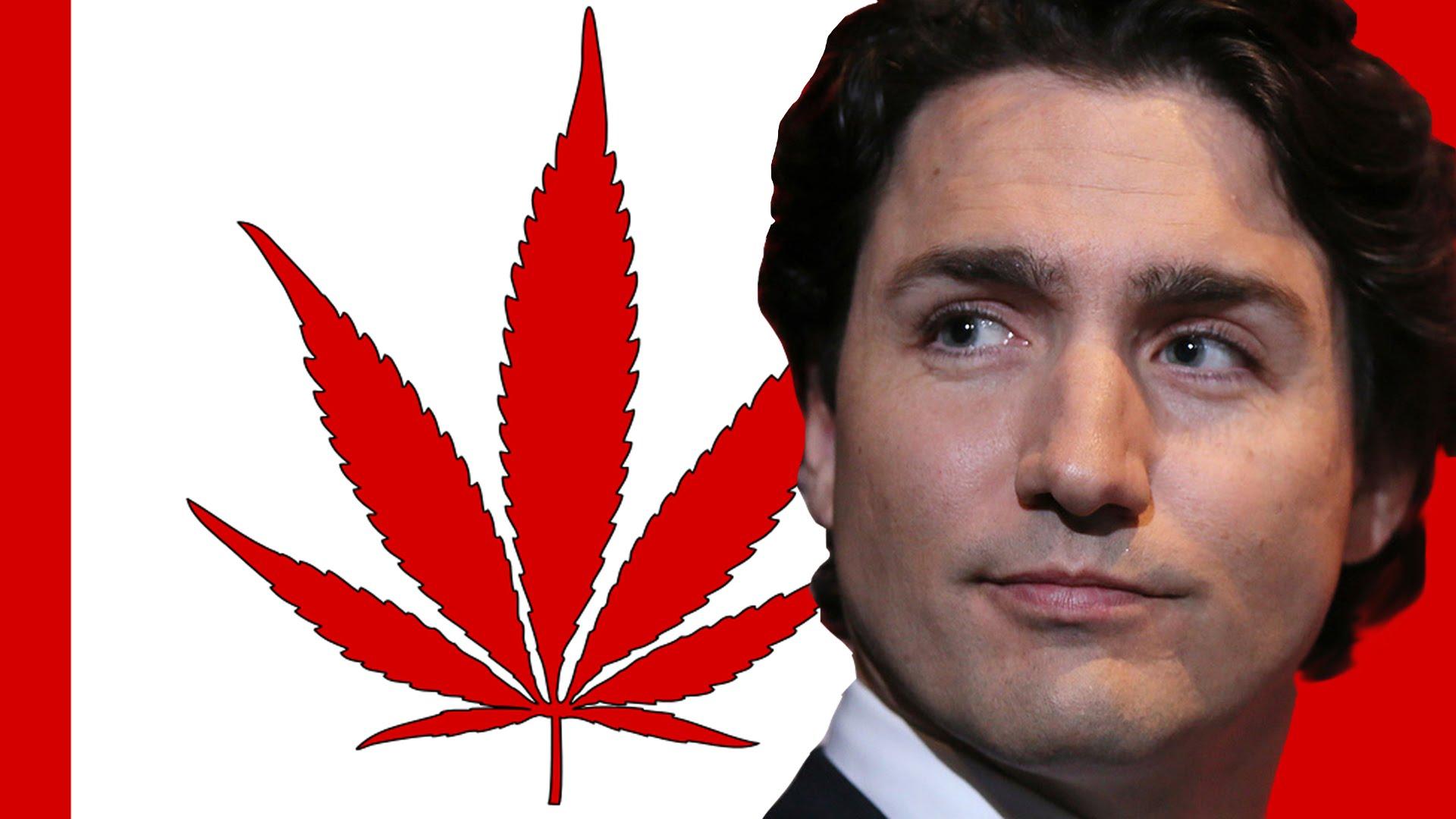 Canada, Trudeau vuole legalizzare marijuana a scopo ricreativo