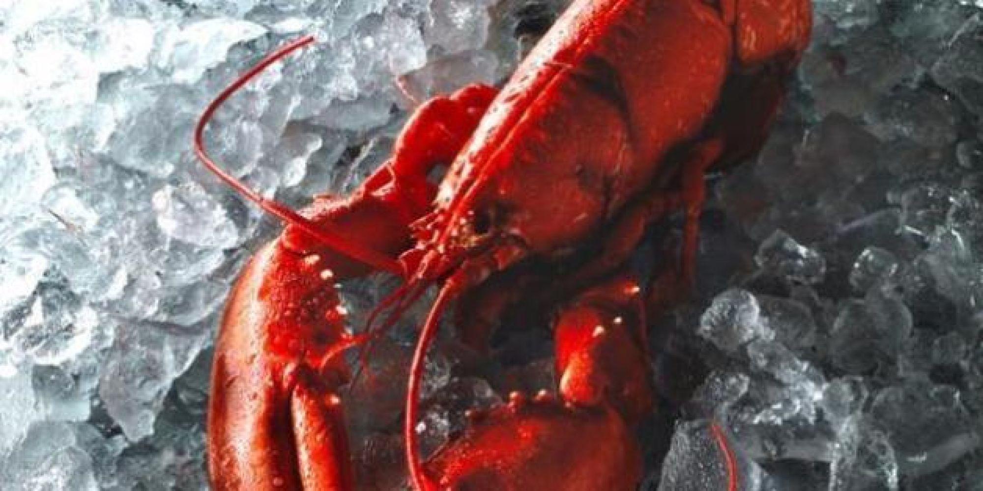 Astice sul ghiaccio con chele legate configura reato maltrattamento animali