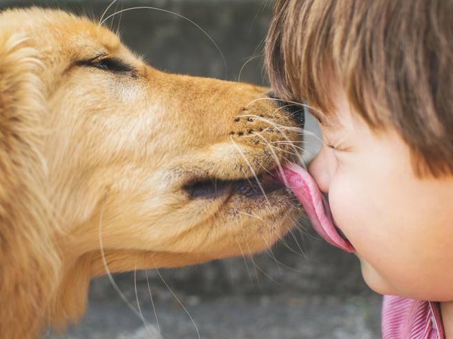 Farsi leccare il viso dai cani sarebbe pericoloso: ecco perché