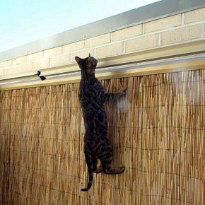 Proteggere gatti con sistema Oscillot