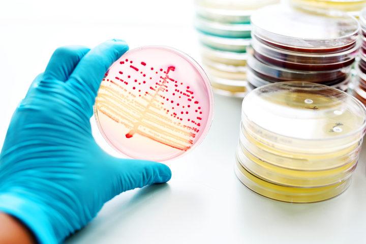 Gonorrea, batterio resistente agli attuali antibiotici