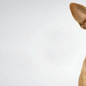 Cane lasciato sul terrazzo muore, proprietaria era andata in vacanza