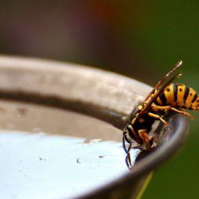 Savignano, puntura di una vespa uccide uomo
