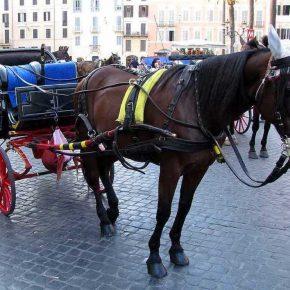 Botticelle di Roma, 43 vetturini a rischio giudizio