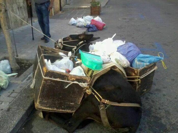 Asino Crolla a Castelbuono: troppi Rifiuti sul Dorso