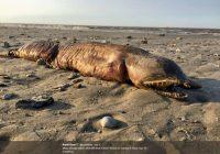 Video strana creatura sulla spiaggia texana