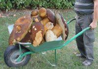 Troppi raccoglitori di funghi italiani, Austria critica Italia