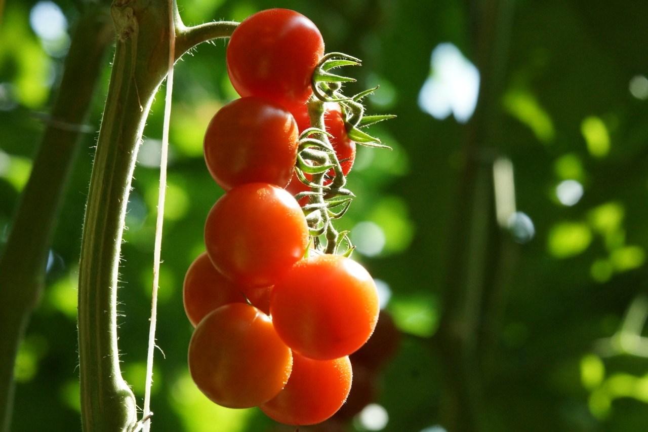 Mantova, bimbo soffoca per pomodorino ciliegino