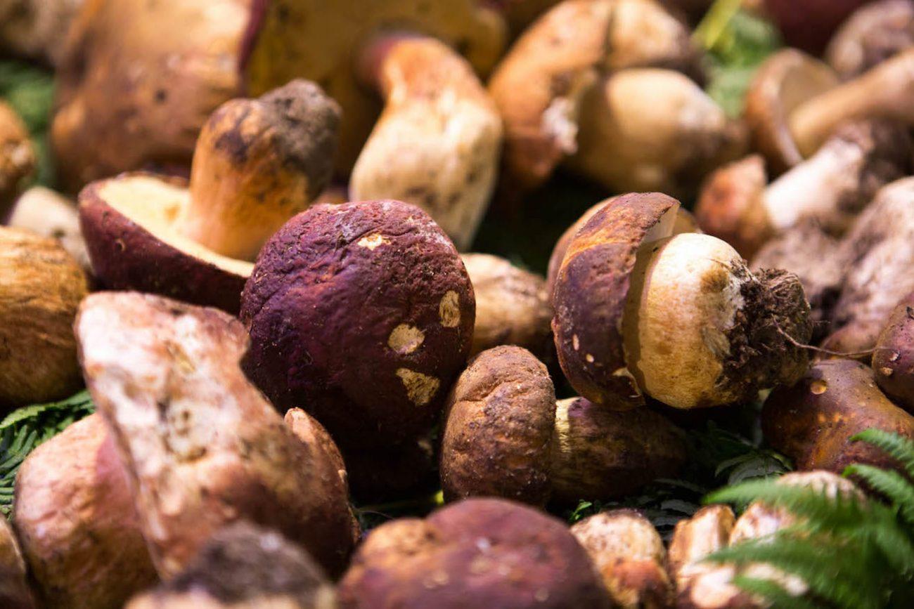 Funghi porcini dell'Est venduti al prezzi di quelli italiani