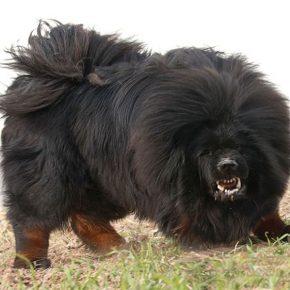 Cani disturbano coi latrati continui: corde vocali recise