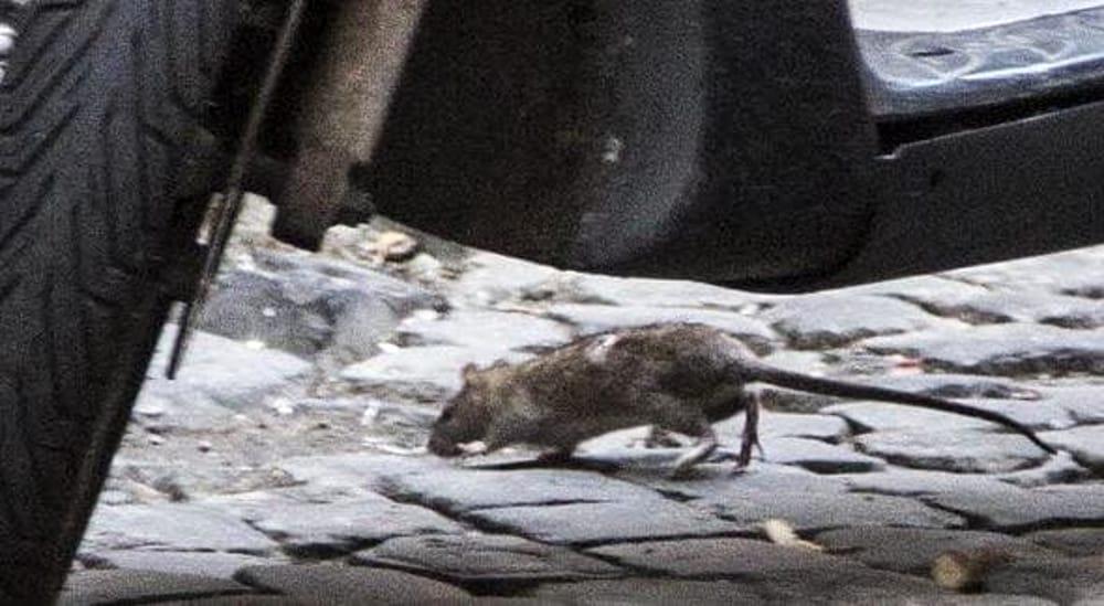 Morso da un topo, l'odissea di un uomo di Jesi