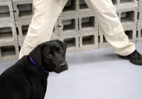 CIA licenzia Lulù, cane non vuole annusare bombe
