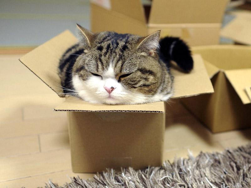 Da Lecce a Vicenza chiuso in un pacco: gatto sano e salvo