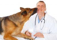 Fiuto del cane, cancro