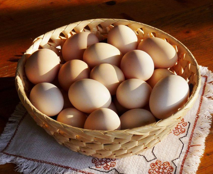 Uova quante settimana bambini