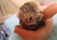 Bettie Bee cat Sudafrica morte
