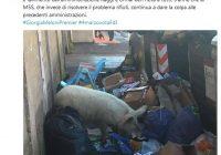 Roma, maiale tra i rifiuti era dei Casamonica
