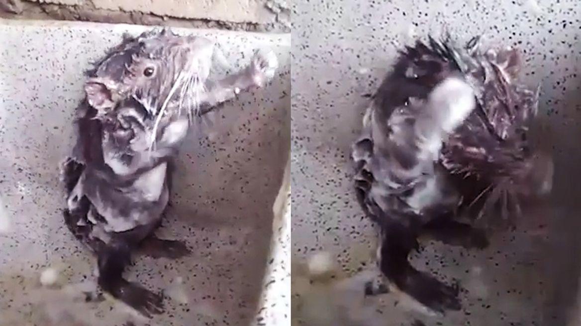 Topo-doccia-Perù-video