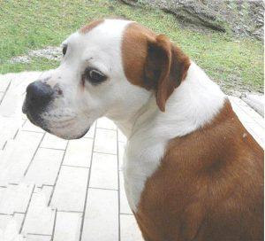 Cane di famiglia aggredisce bimba, grave
