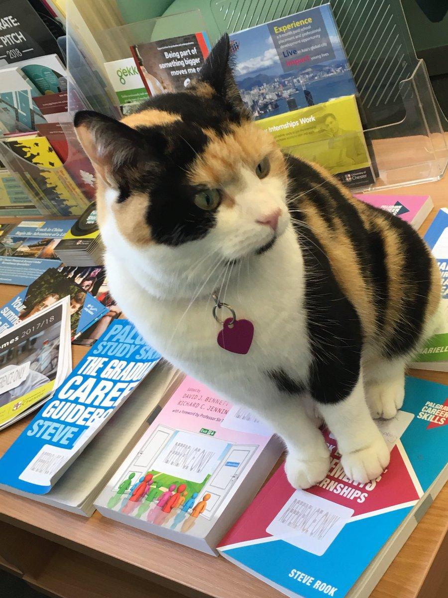 Chester-Millie-gatto