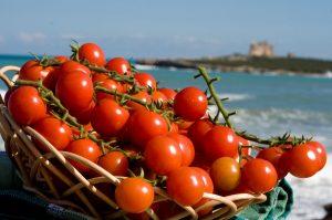 Pachino-inutile-raccogliere-pomodori