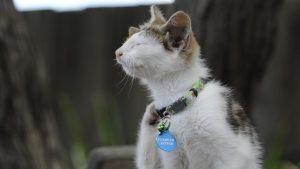 gatto-melbourne-frankie-orecchie