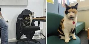 Millie-Chester-gatto-università
