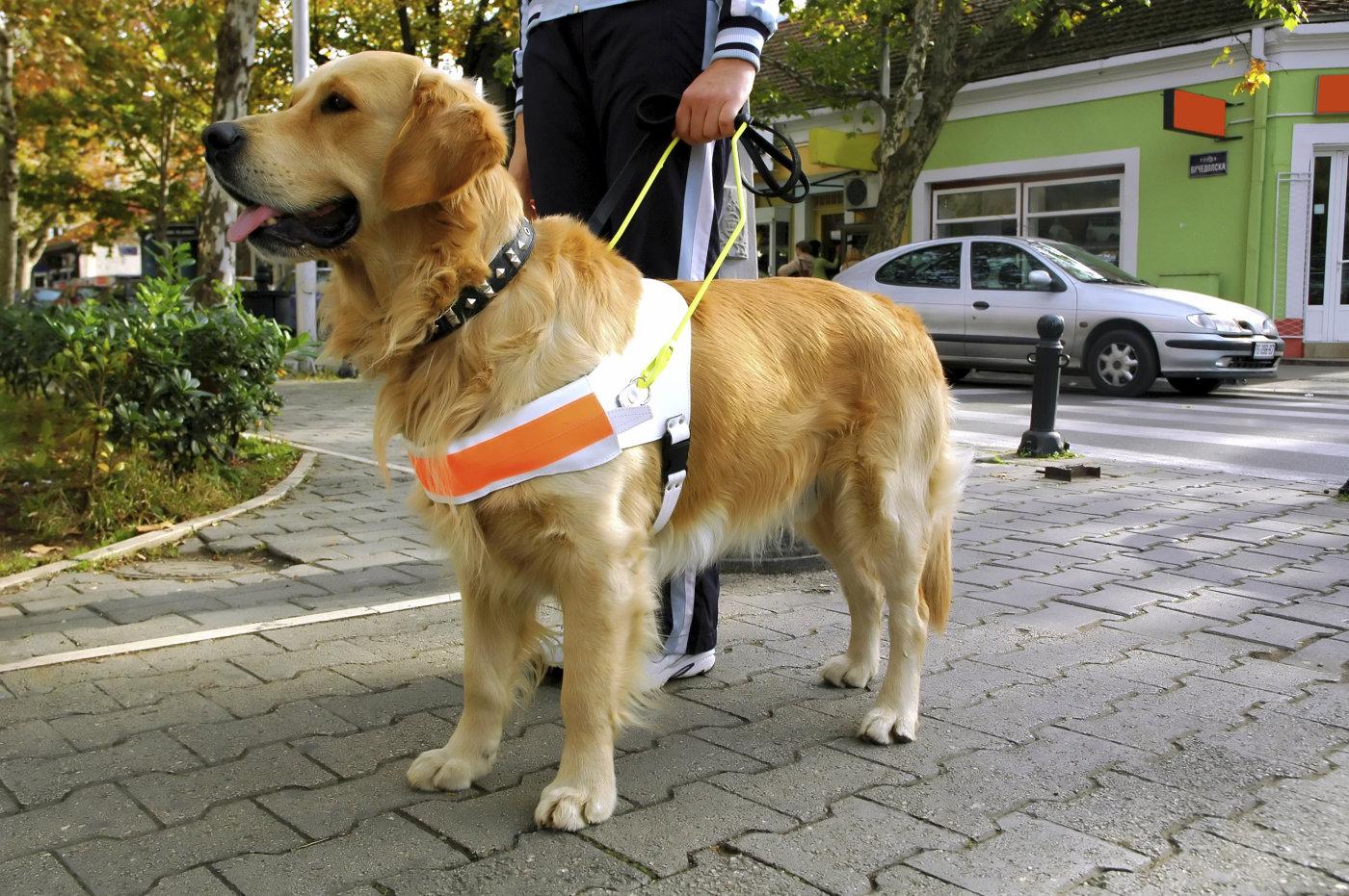 Cieco-medico-cane-guida