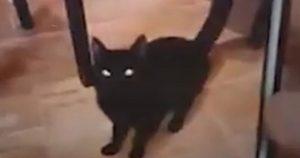 gatto-sevizie-lavatrice-spagna