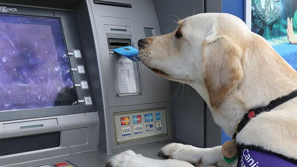 conto-corrente-cani-gatti-banca