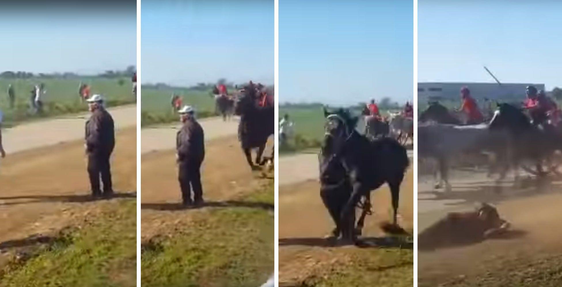 cavallo-chieuti-morte